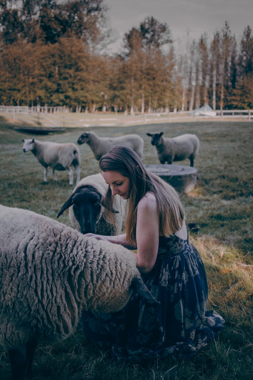woman sitting while touching sheep on green field near trees during daytime