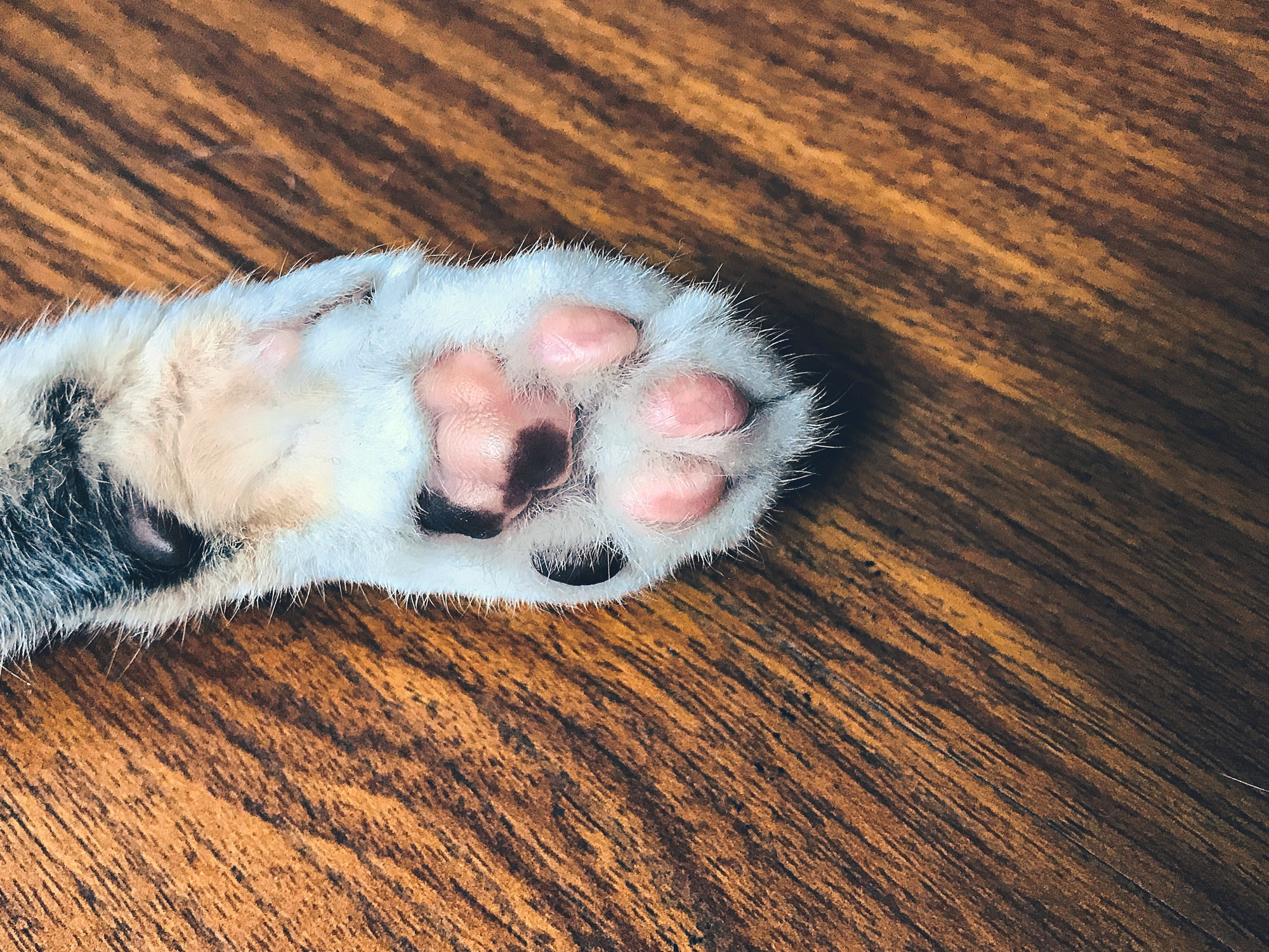 Declawing Your Cat Not an Option?