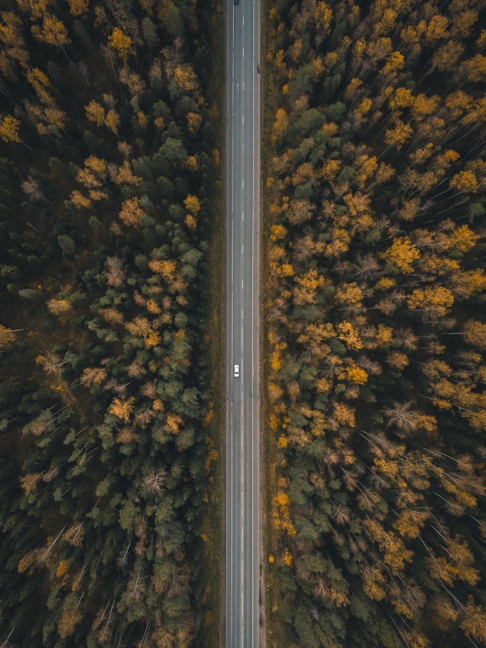 vehicle traveling on road between trees
