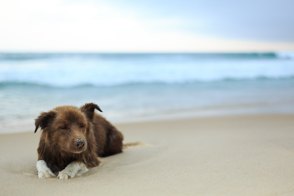 short-coated brown dog near seashore during daytime