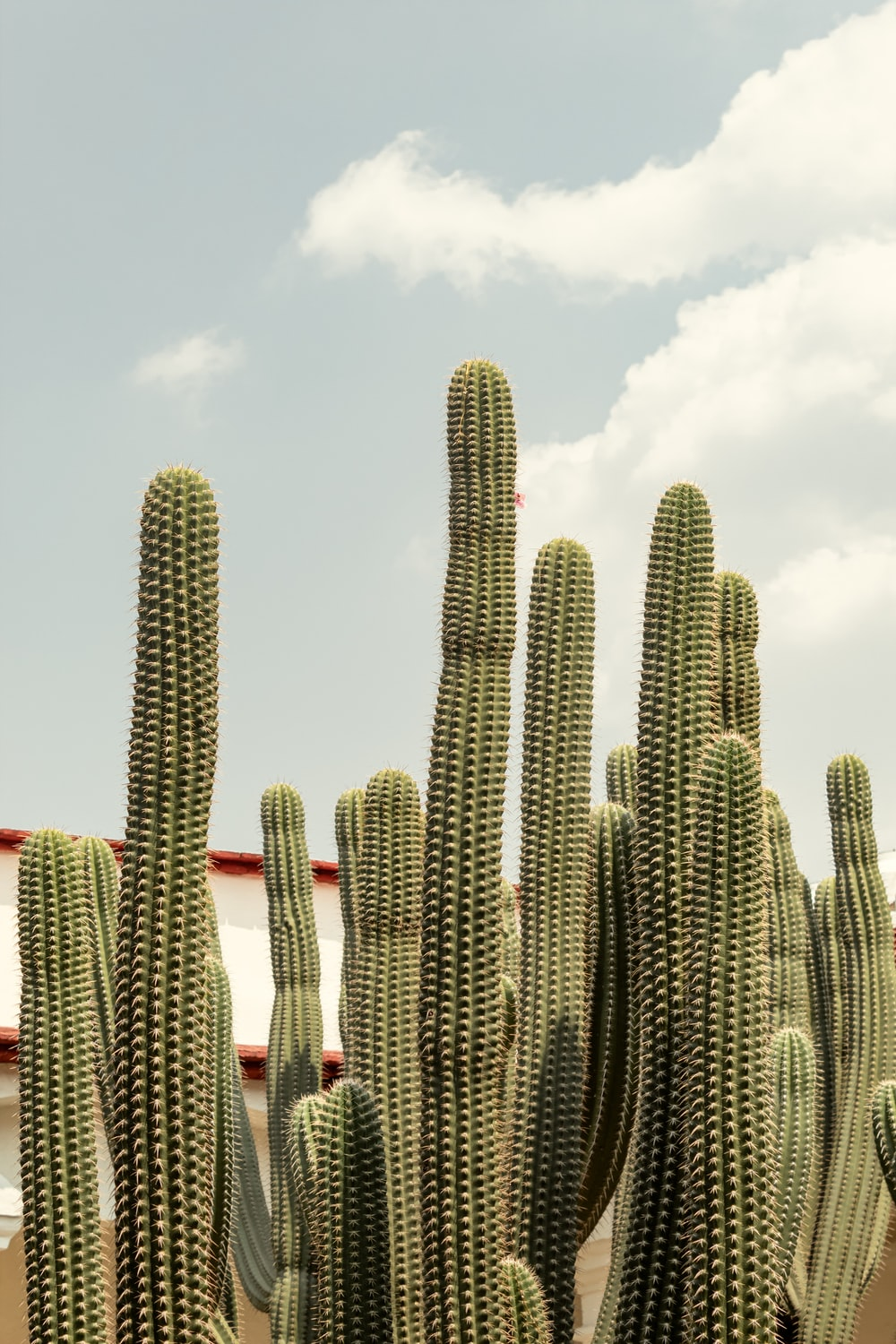 green cacti during daytime