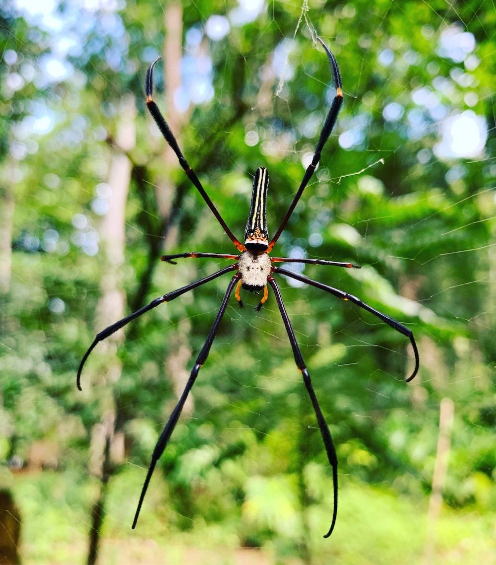 black and brown spider on web during daytiem