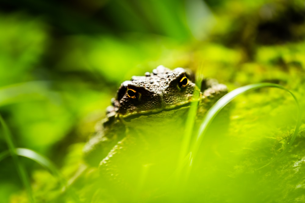 photography of green frog