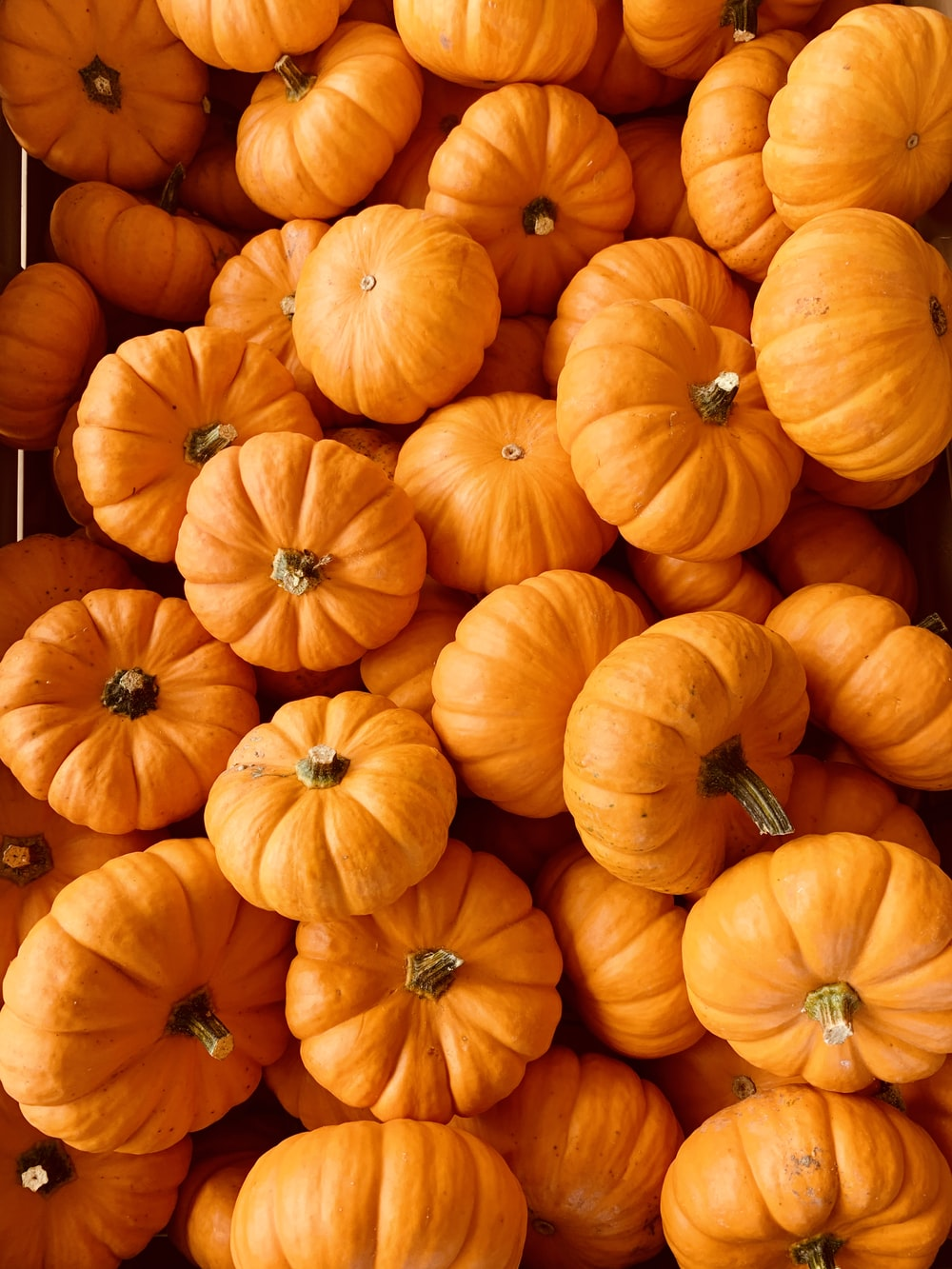 ile of orange pumpkins