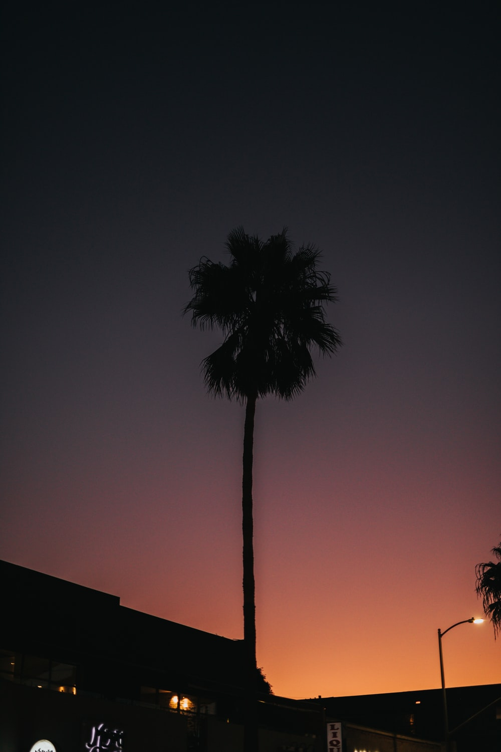 silhouette photography of a tree during golden hour