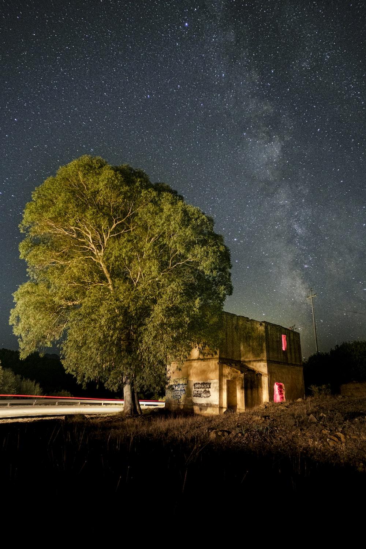 house beside tree