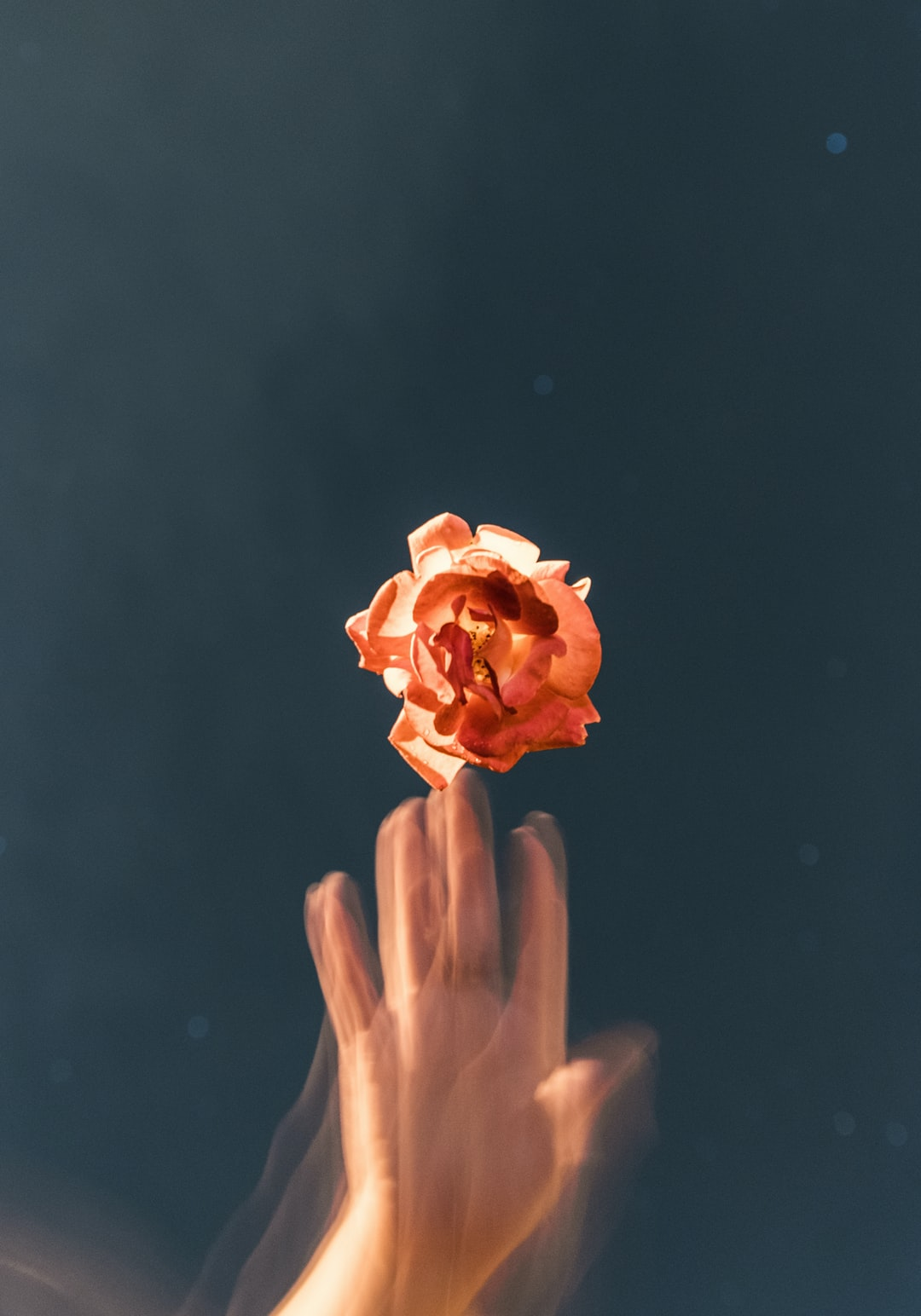 Taken at night with a slow shutter speed, the flower was floating stationary overhead on some clear thread while my hand created the motion blur.