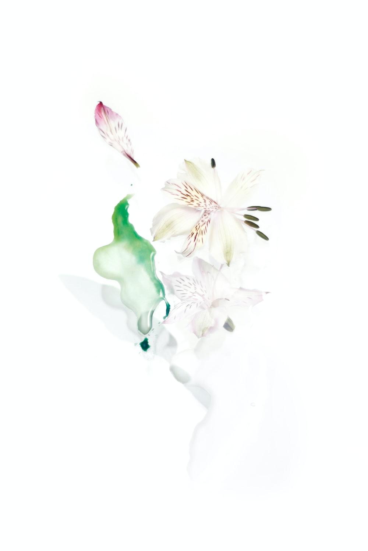 white petaled flower illustration
