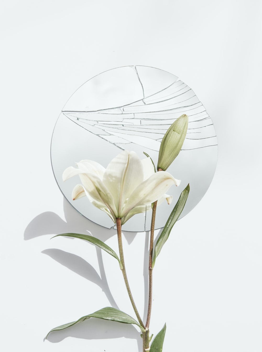 white petaled flower and mirror