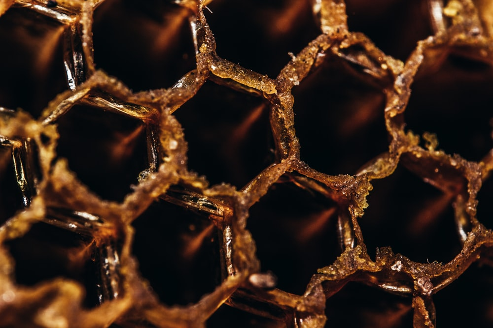 close-up photography of bee hive