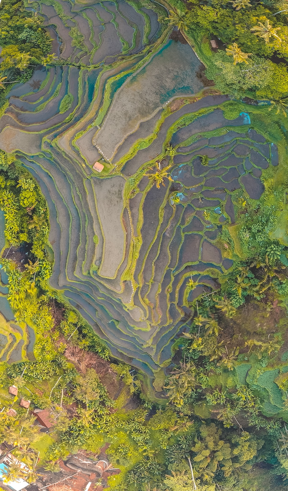rice terracess during daytime