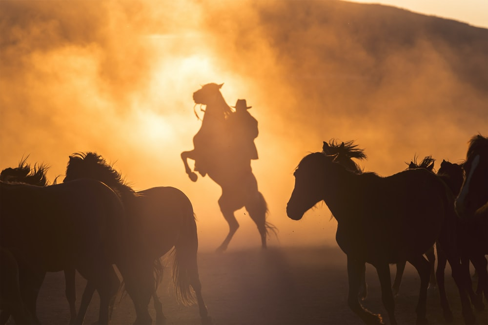 silhouette photography of horses