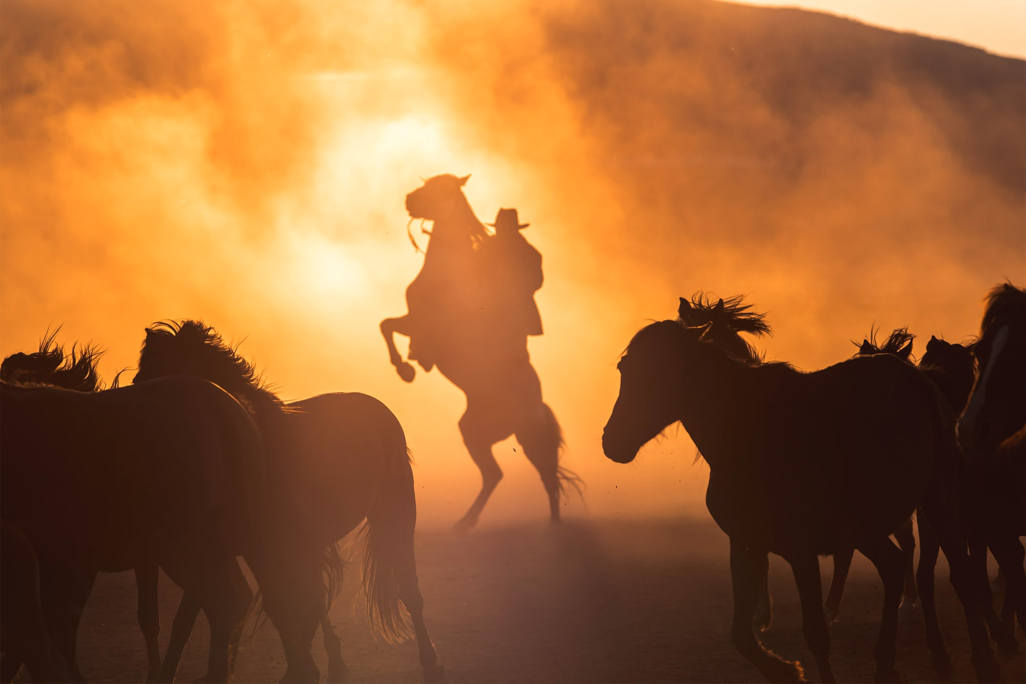 This is one of the pictures I took of the wild horses in Turkey. I was so lucky to capture the horse rearing with the cowboy on the back. The whole scene was just perfect as the wild horses in front of them created this dust and together with the sunset it formed a silhouette out of them! This must be one of the most beautiful pictures I've taken to date!  Check out more of my shots on https://www.instagram.com/daniilvnoutchkov/