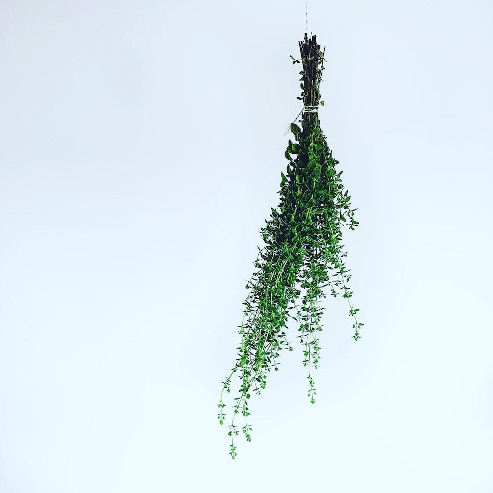green leafed plants illustration