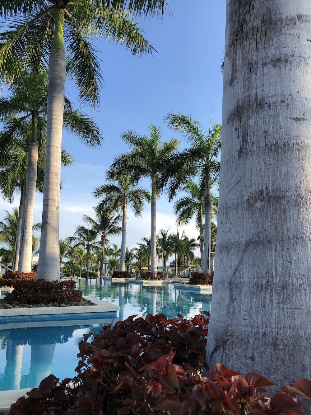 coconut ree