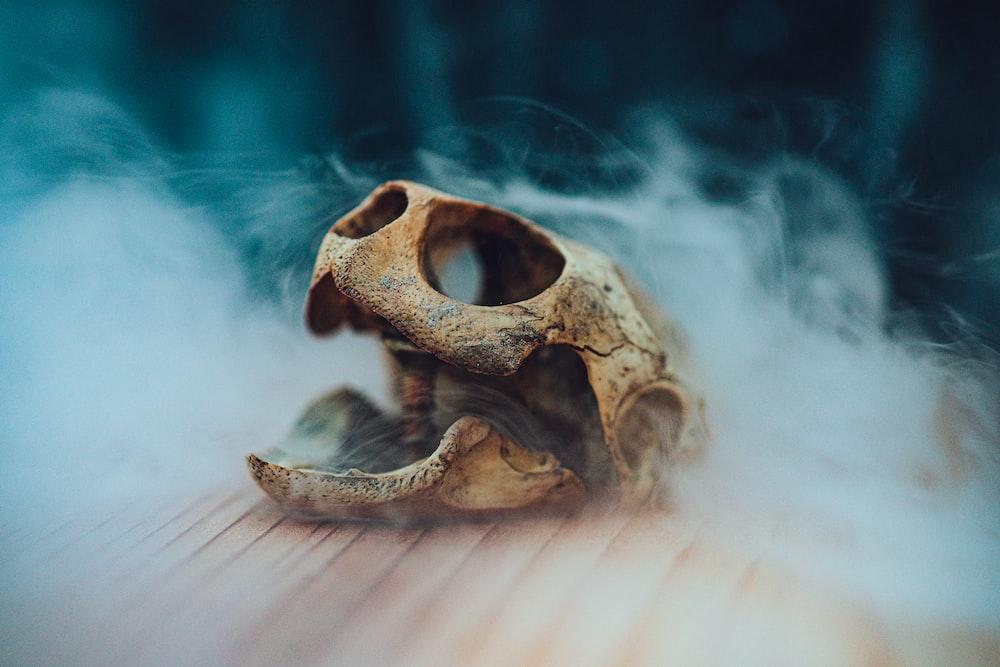 beige animal skull
