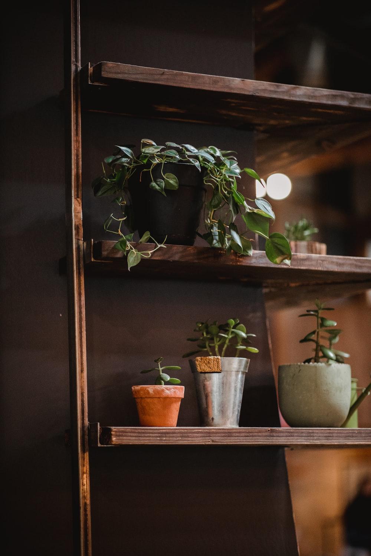 green leafed plant on shlf