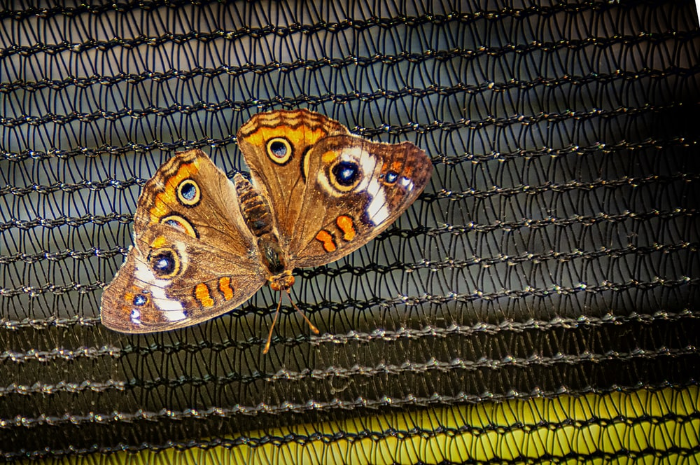 brown butterfly on black textile