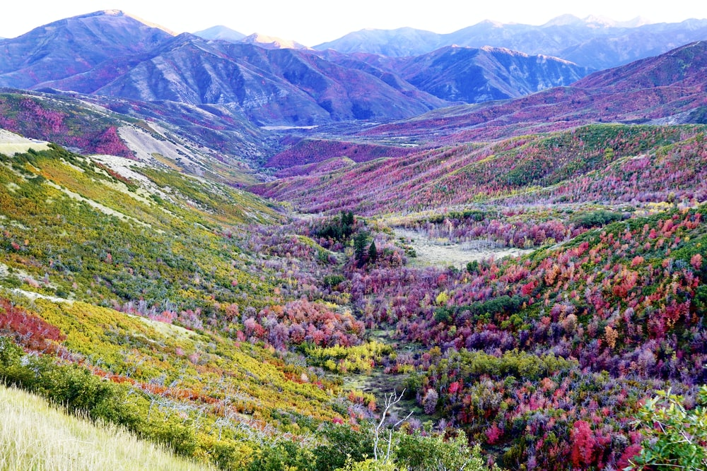 wide-angle photography of flower field and mountain range during daytime
