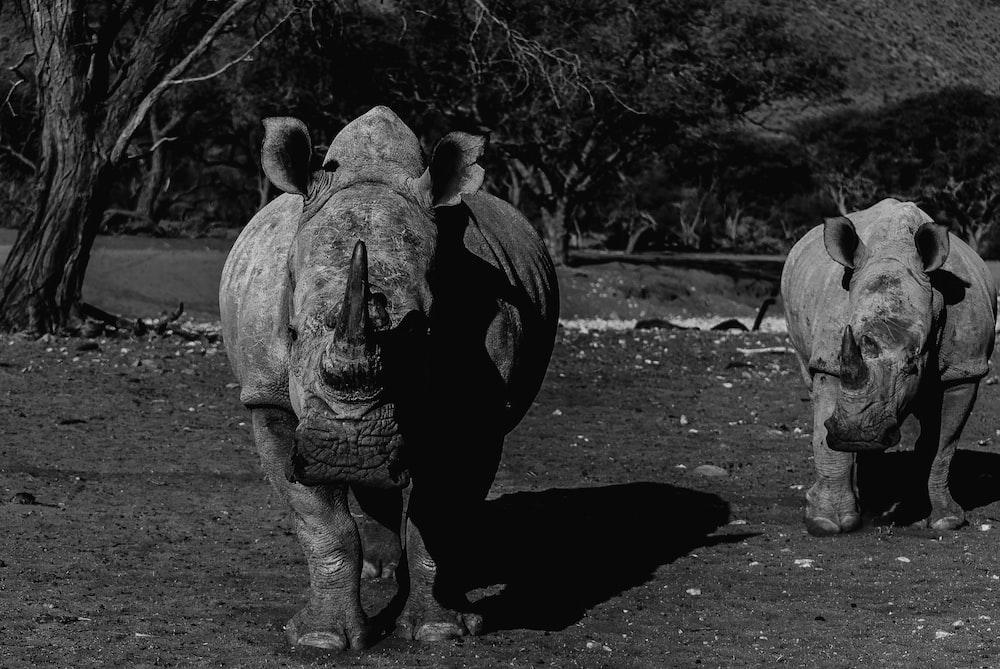greyscale photo of rhinoceros