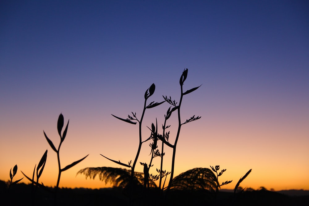 silhouette photography of plant