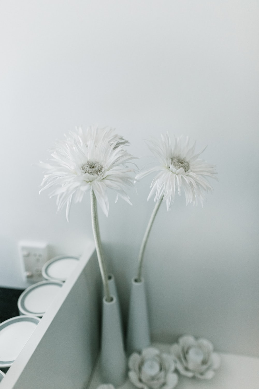 white daisy flowers in vase