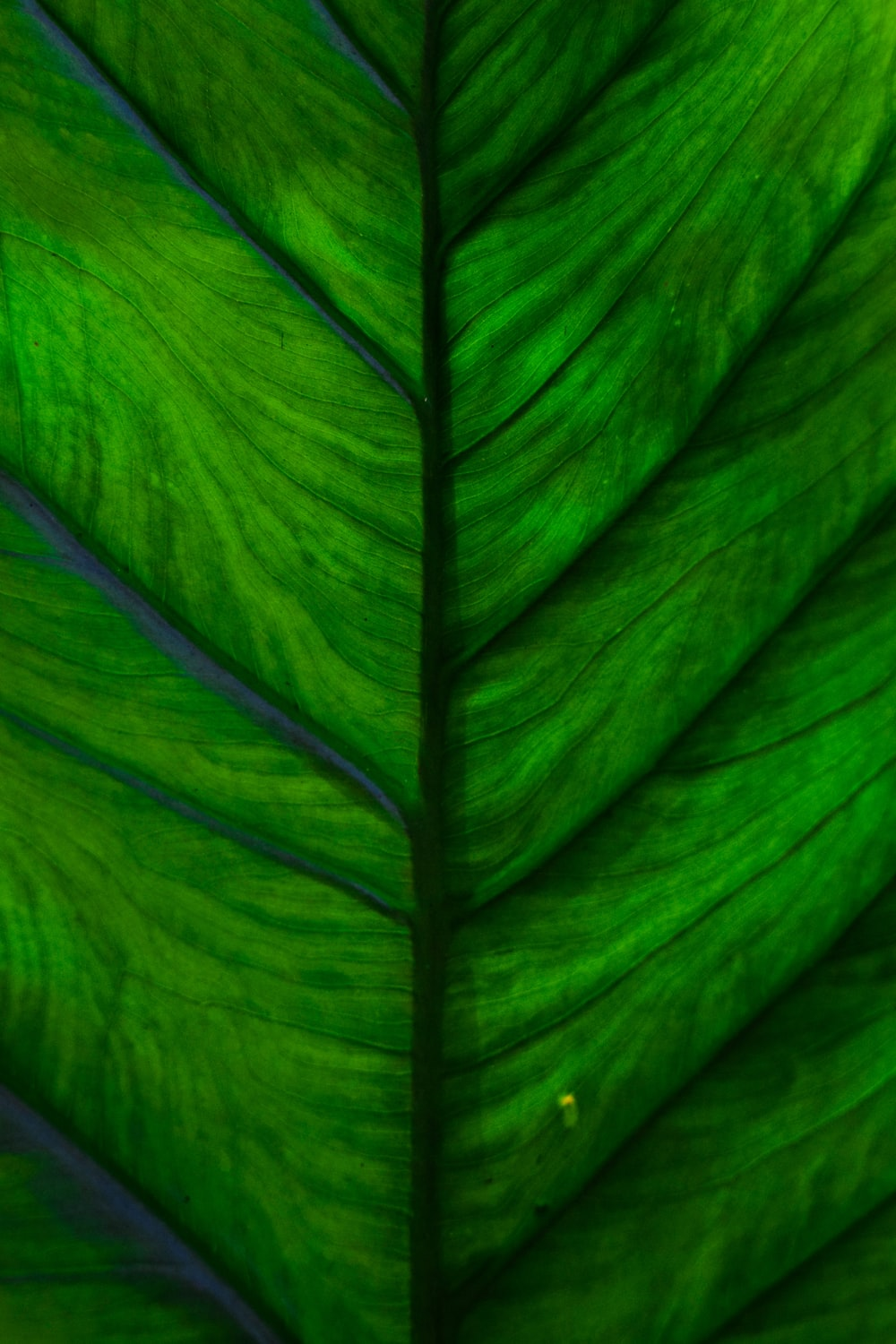 green leaf macro photography