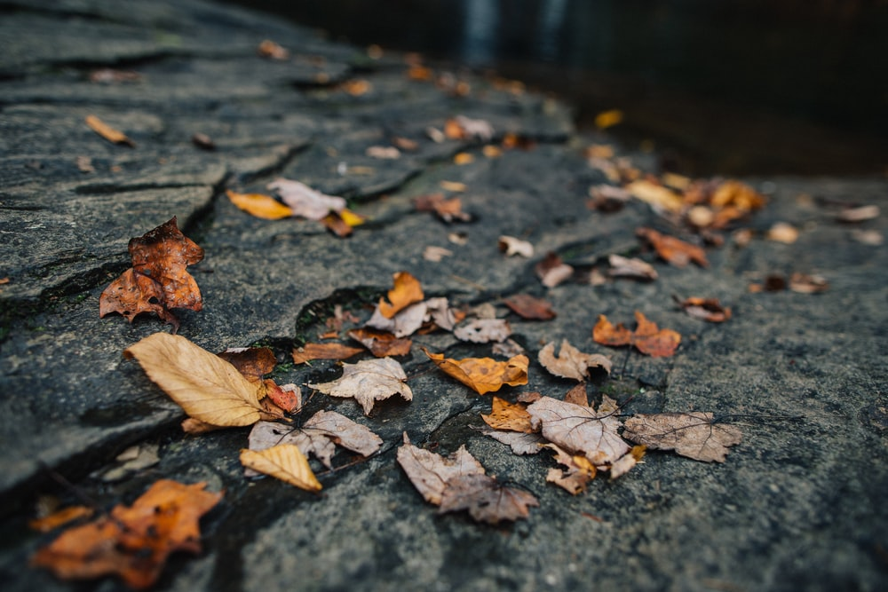 withered leaves on concrete surface