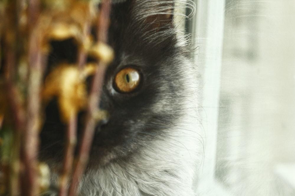 gray cat near glass window