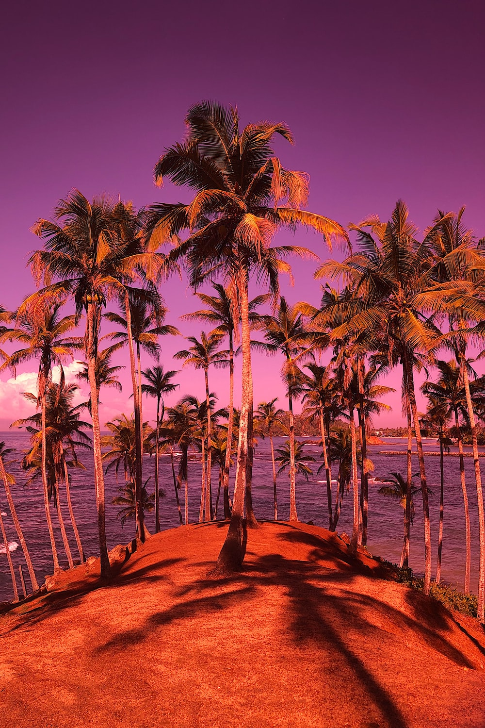 green-leafed coconut trees near body of water