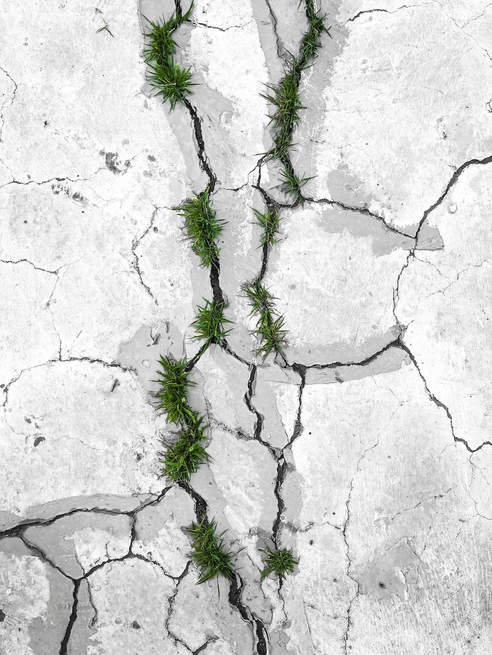 green grass on concrete cracks