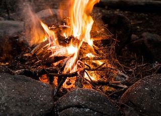 bonfire across green trees