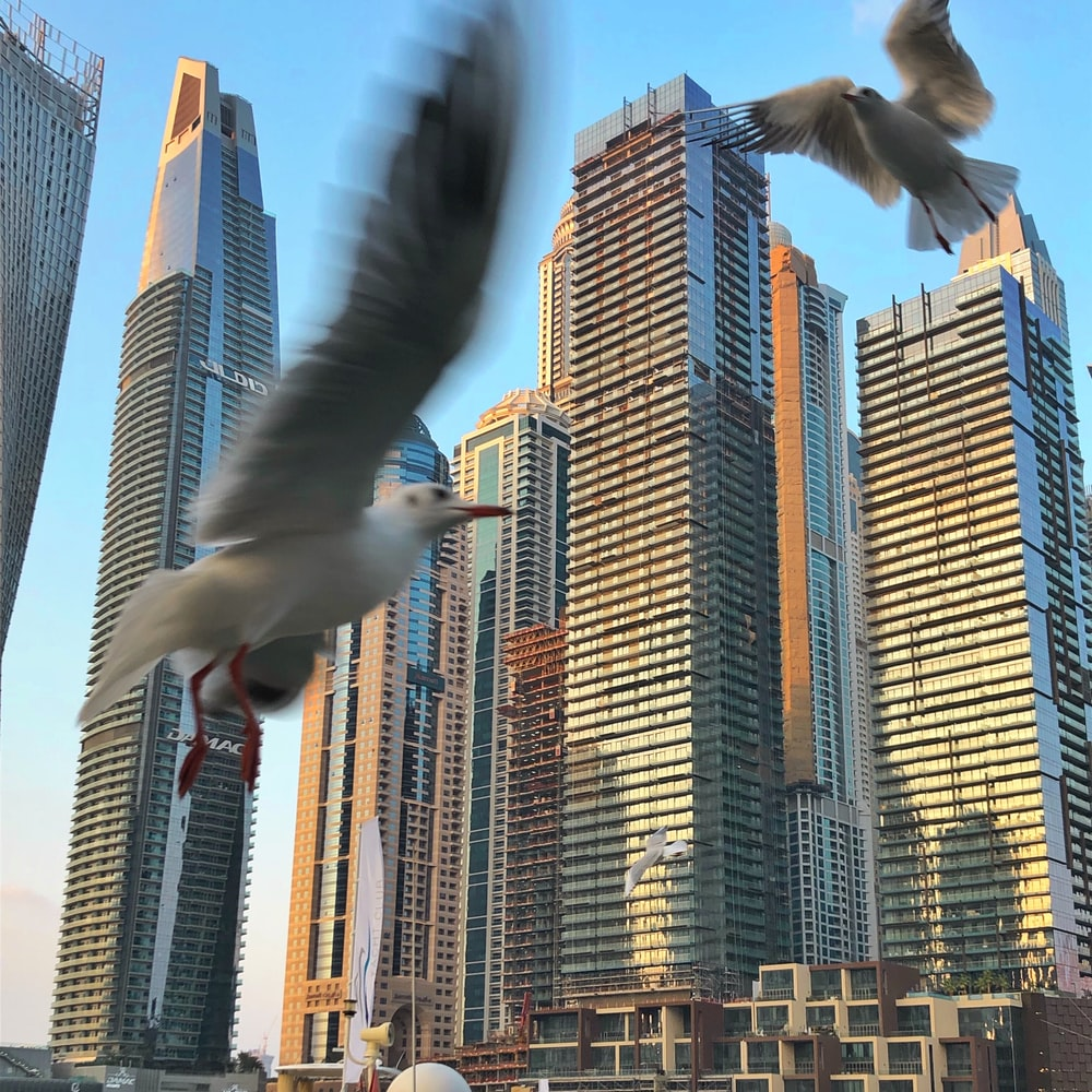two pigeons fly in front buildings