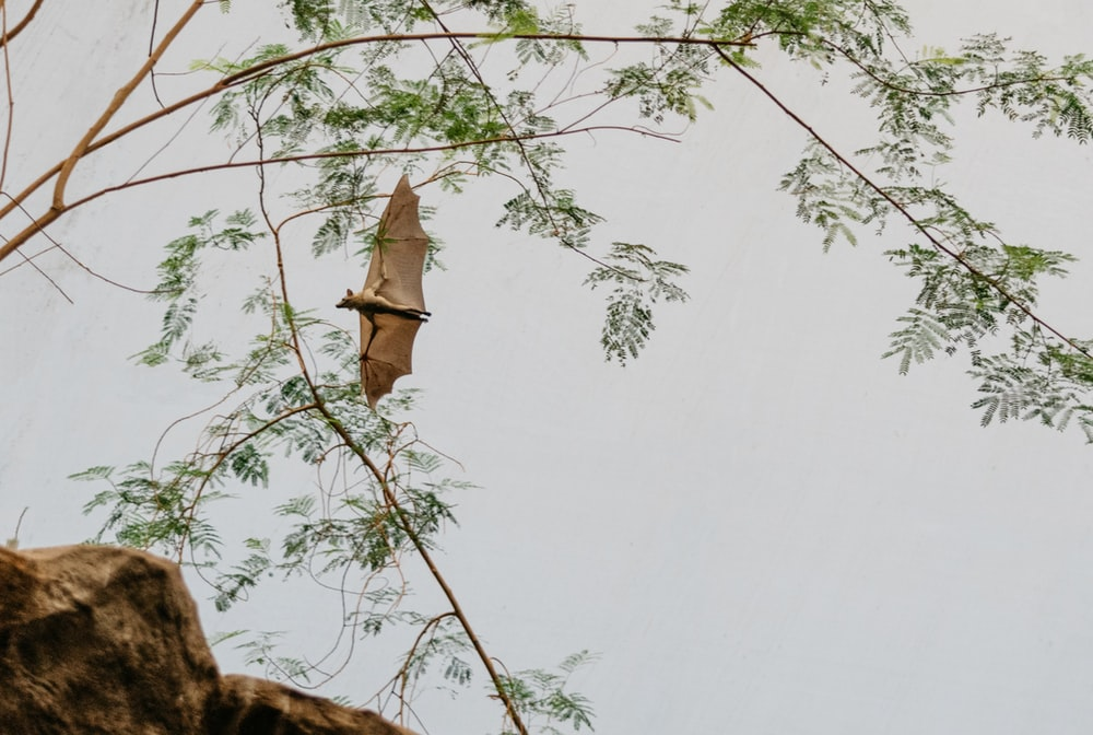 brown bat soaring beside tree