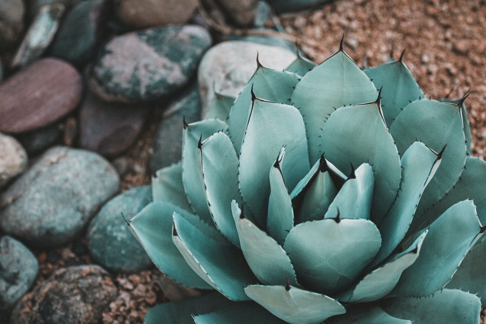 shallow focus photography of green succulent plant