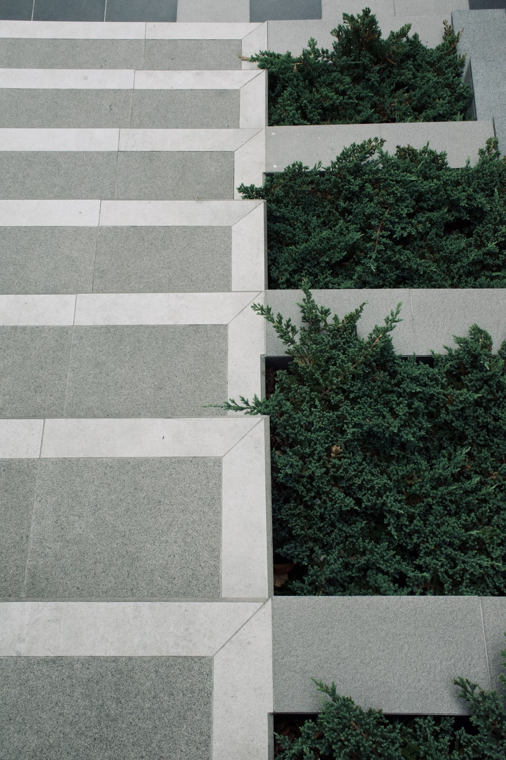 green-leafed plants on gray building