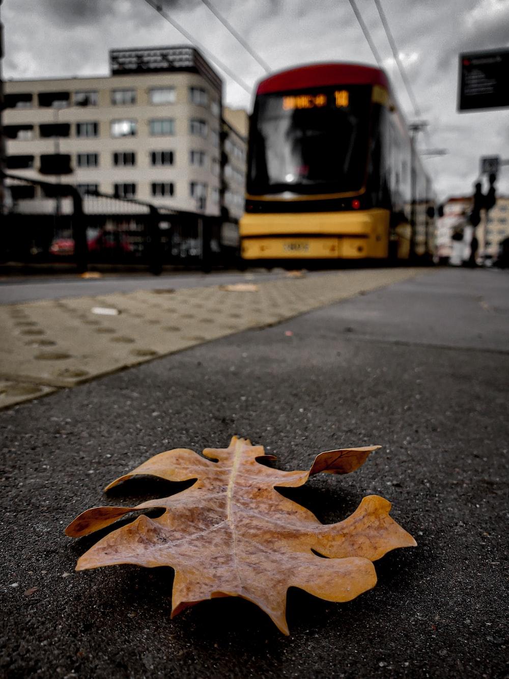 dried leaf on pavement