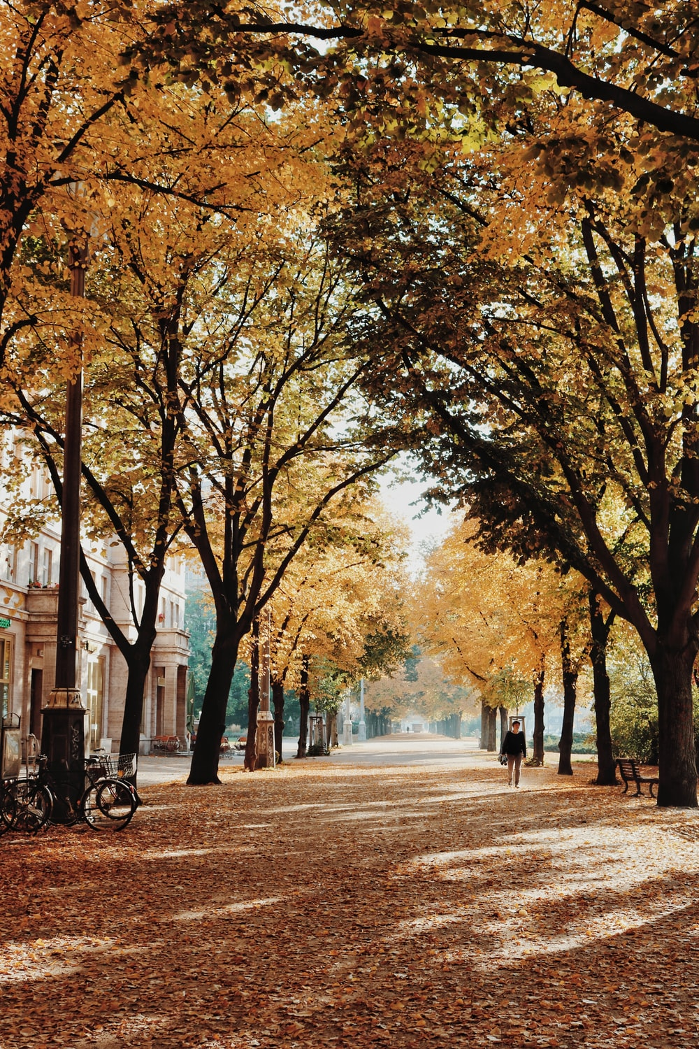 photo of yellow and green trees