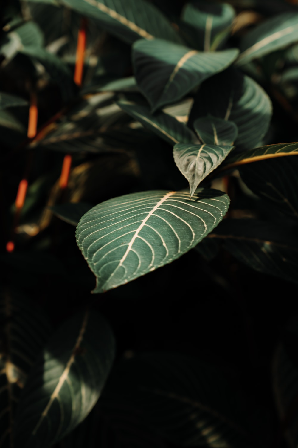 close-up photography of green-leafled plant