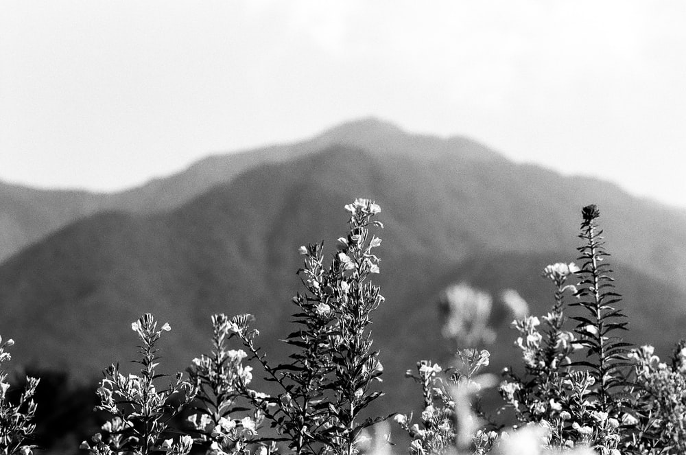 plants and mountain