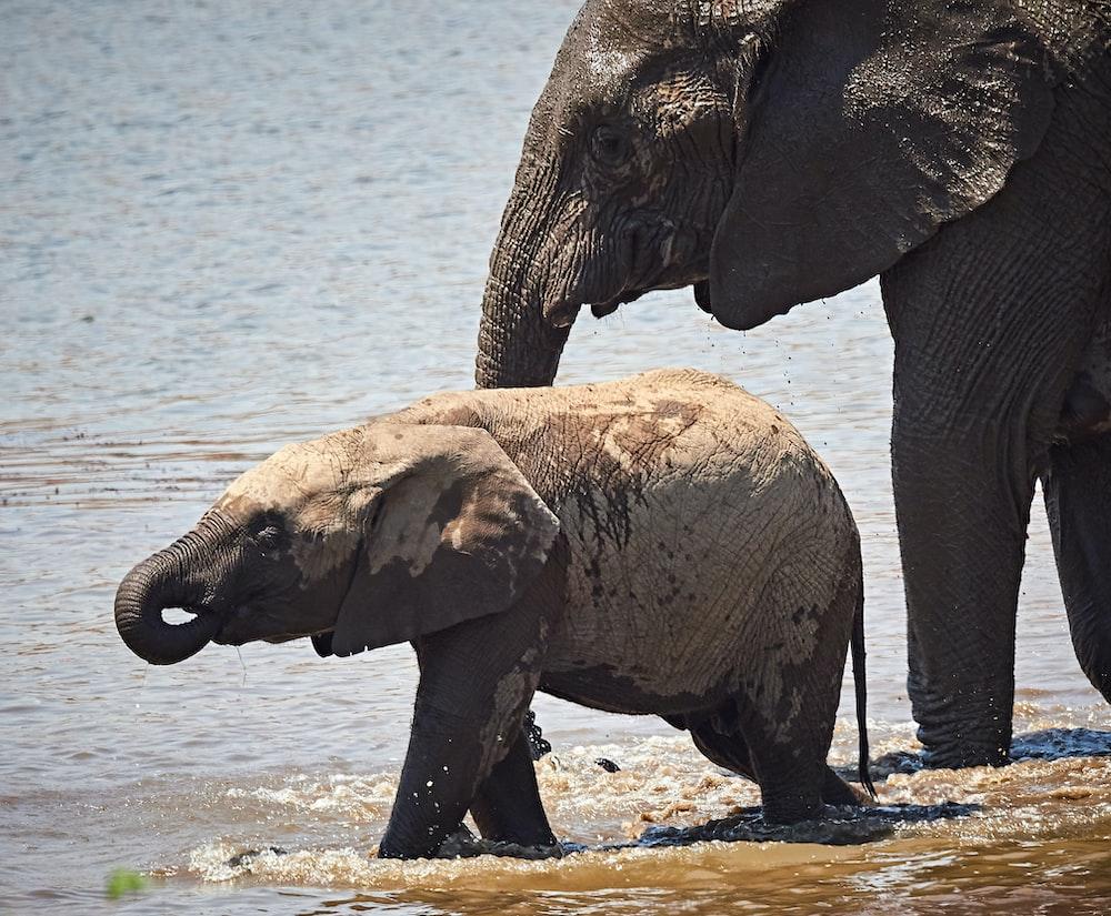 two black elephants