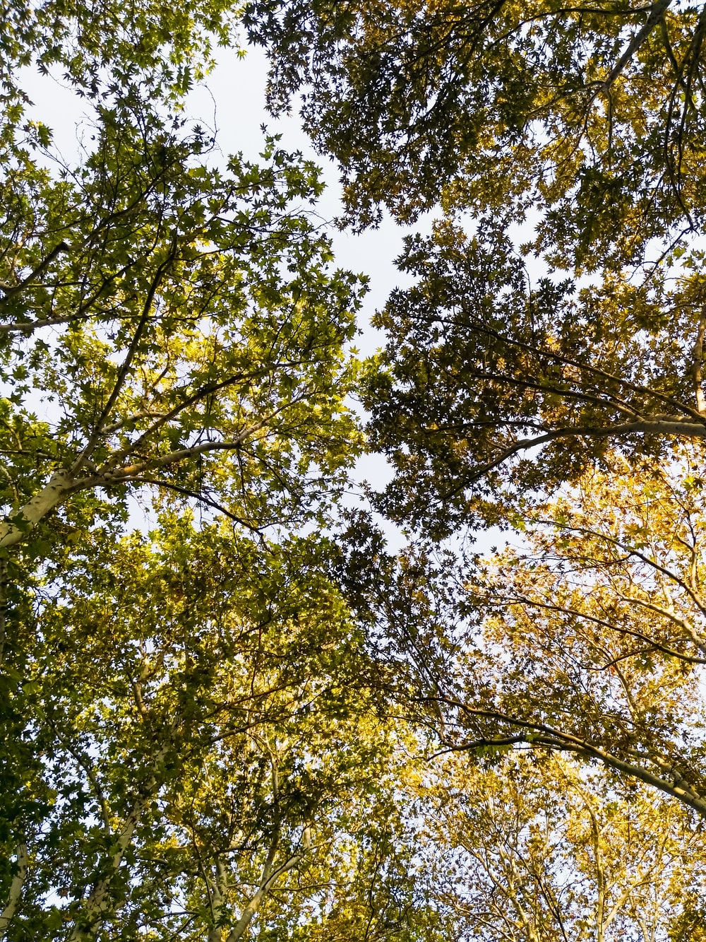 low-angle photography of green leaf trees
