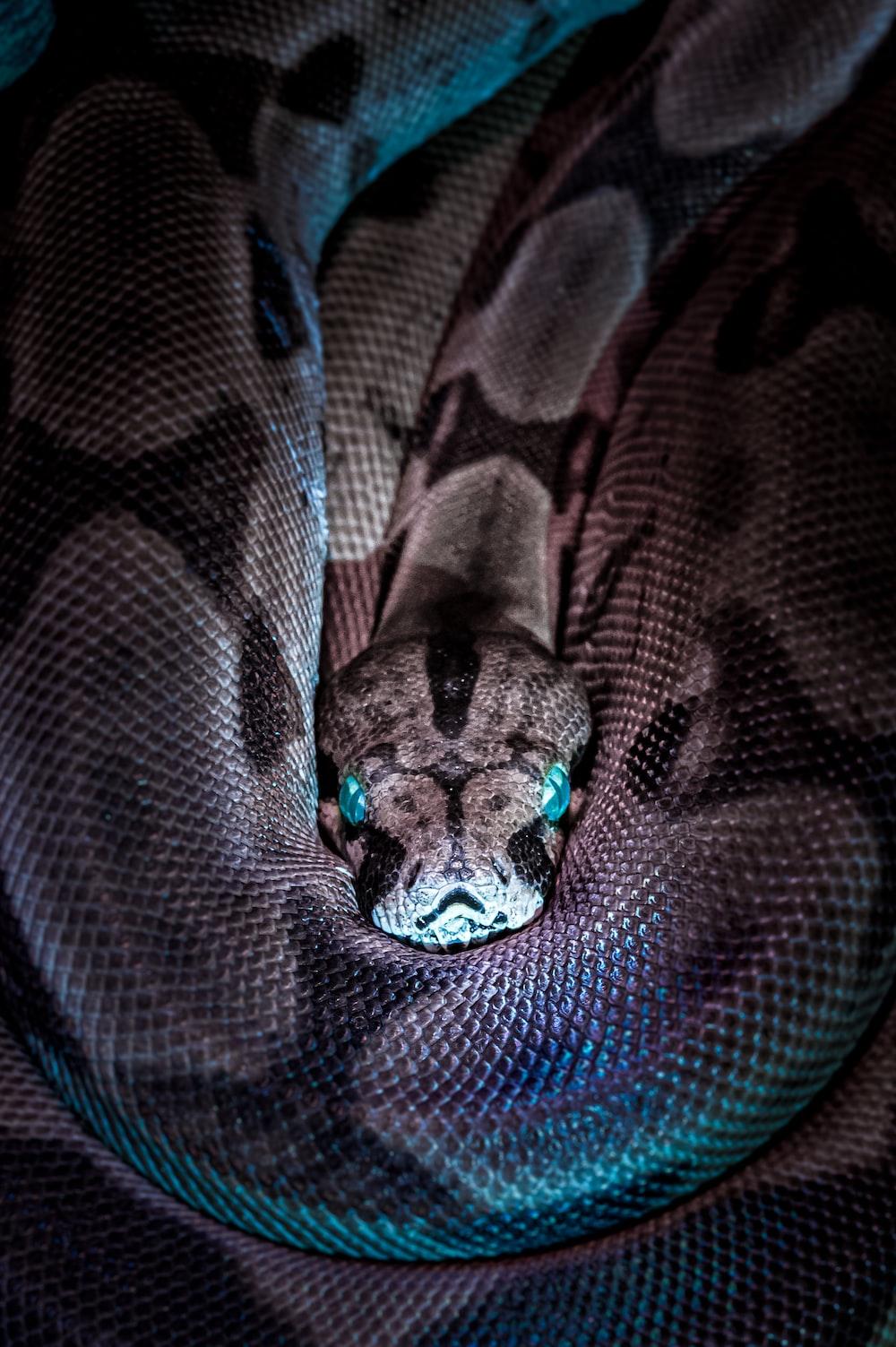 brown and black snake