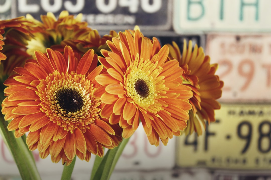 Large orange Gerbera daisy flowers on green cut stems are displayed on a table against a backdrop of vintage license plates with text and numbers.