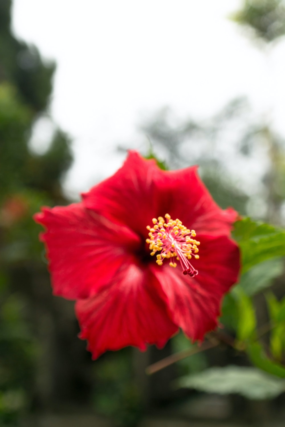 red hibiscus flower during daytime