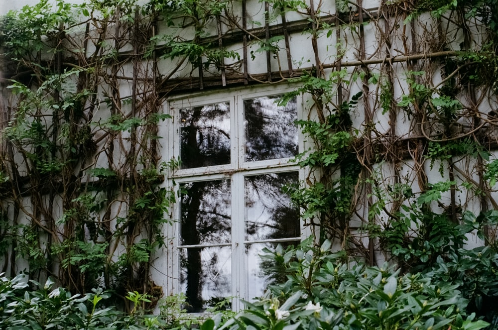 closed pane window