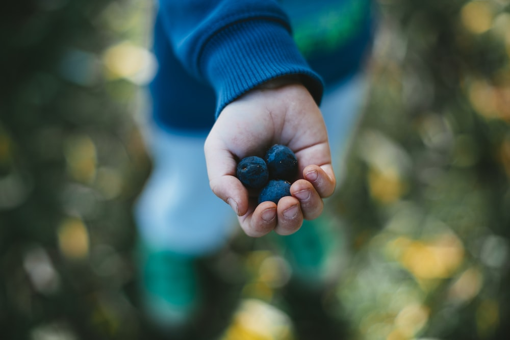 shallow focus photography unknown person holding blueberries