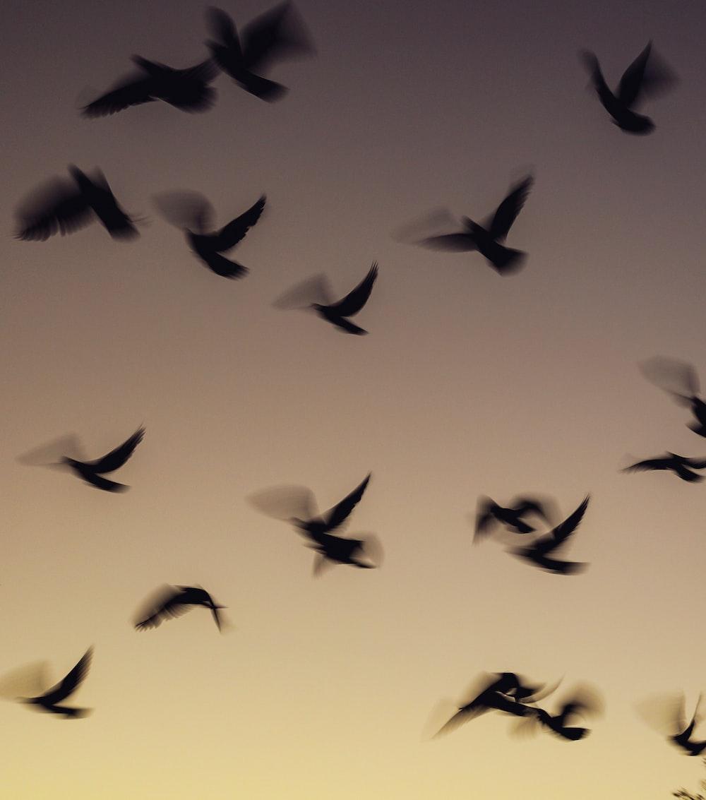 flock of black bird painting