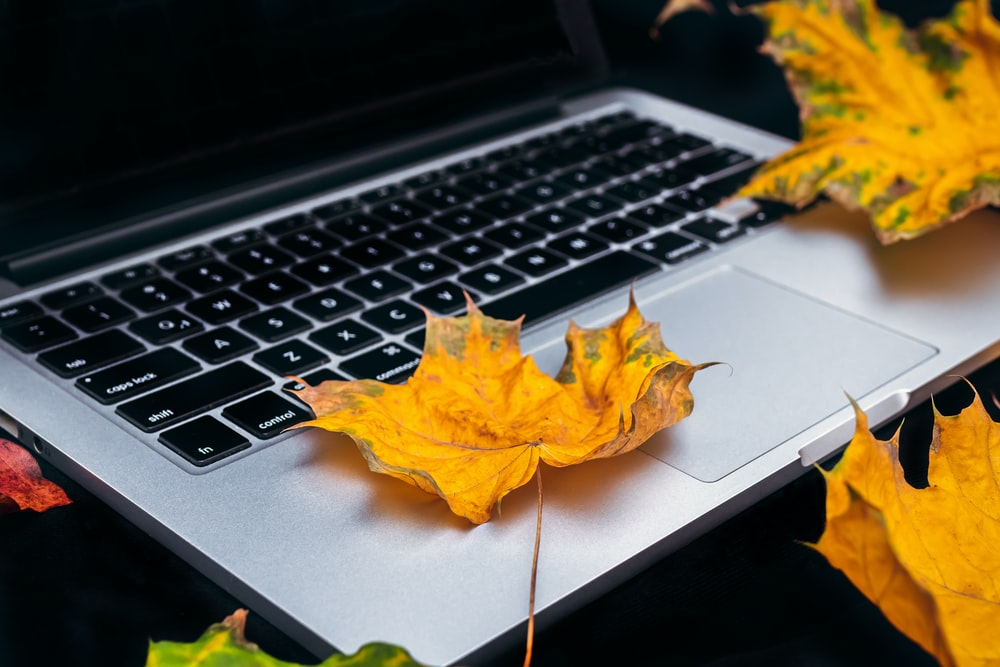 yellow leaf on MacBook Pro