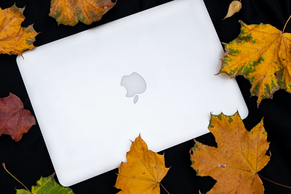 MacBook beside dried leaves